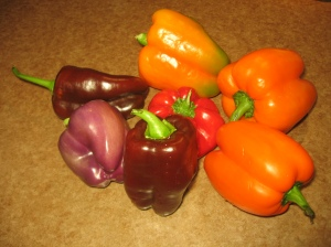 Some of the peppers before they were chopped and dried. Paula Diakiw 2009.
